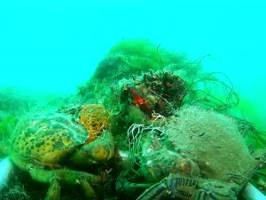 Squabbling crabs